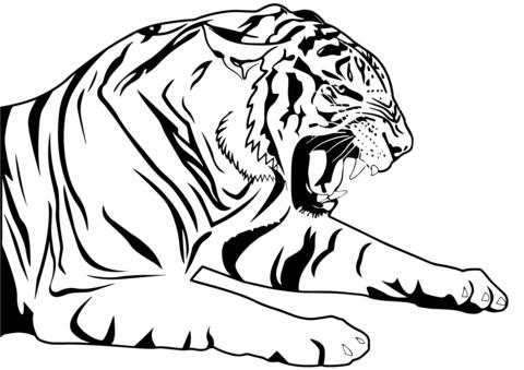 Dibujos De Tigres Hechos A Lápiz Entra Para Admirarlos