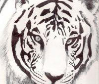 Dibujos de Tigres para niños