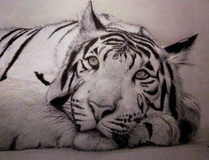 Dibujos de Tigres siberianos