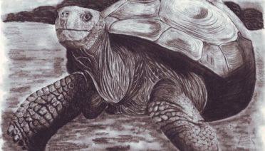 Dibujos de Tortugas para descargar