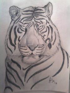 tigre siberiano a lápiz
