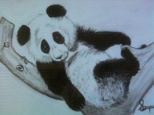 dibujos de osos panda a lápiz