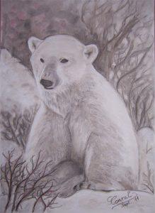 oso polar a lapiz