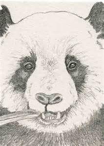 panda a lapiz