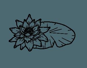 Dibujos de Flor de Loto chidos