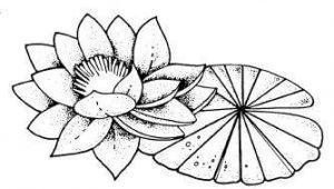 dibujos a lápiz de la flor de loto