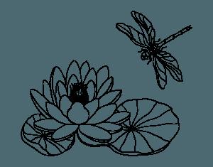 flor de loto e insecto