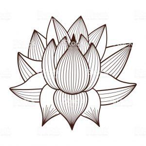 imagenes a lápiz de flor de loto