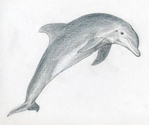 delfin a lápiz