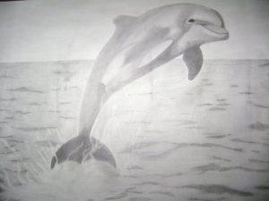 delfin hecho con lápiz