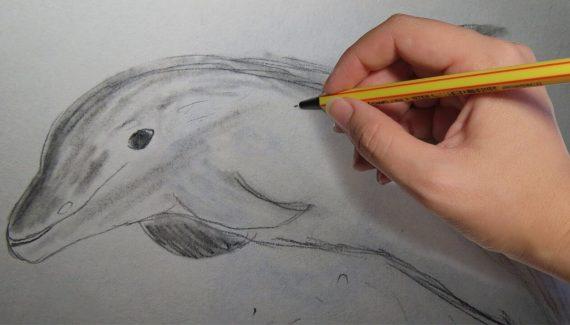 dibujos de delfines a lápiz