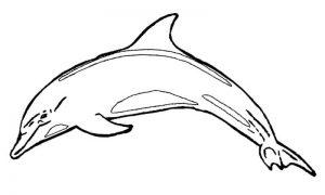 dibujos de delfines para descargar
