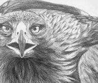 Dibujos de Águilas