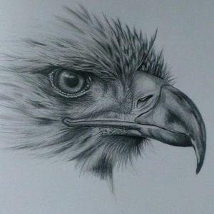 Dibujos De águilas A Lápiz Realistas Para Imprimir