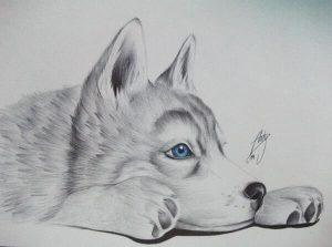 Dibujos De Lobos A Lápiz Realistas Bonitos Para Imprimir