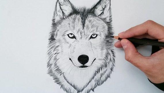 dibujos de lobos para niños