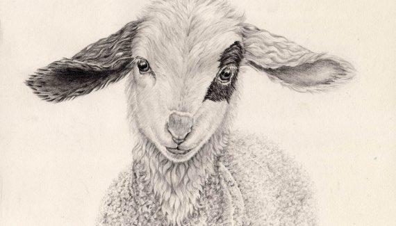 dibujos de ovejas chidos