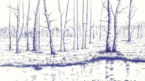 bosque en lápiz