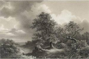 bosques hechos a lápiz
