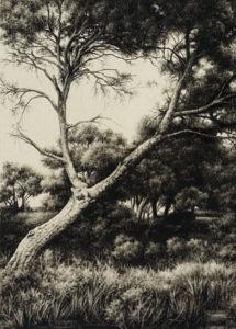 bosques y árboles