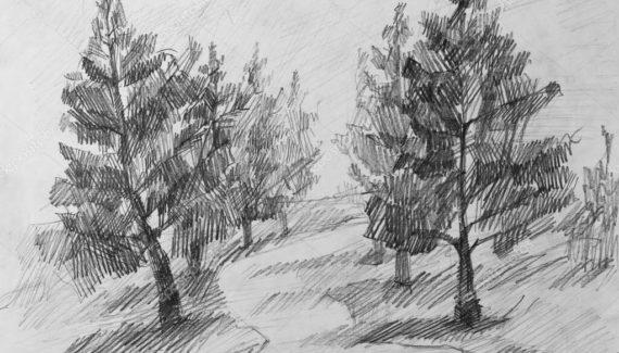 dibujos de bosques realistas