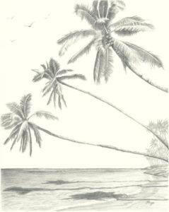 palmeras de playas