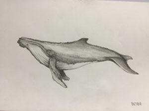 ballena hecha a lápiz