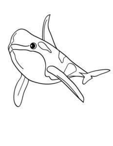 dibujo de una ballena