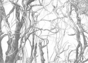 dibujos de la selva a lápiz