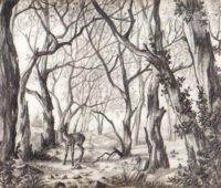 Dibujos de La Selva