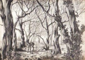 dibujos de la selva para imprimir
