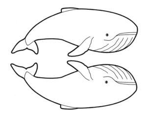imágenes de ballenas para bajar