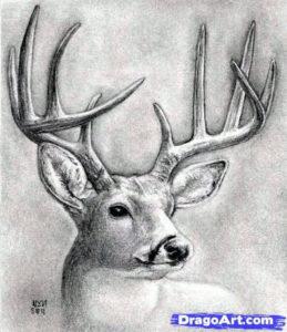 dibujos de renos para imprimir