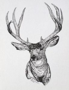 dibujos de renos realistas