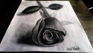 rosa a lápiz